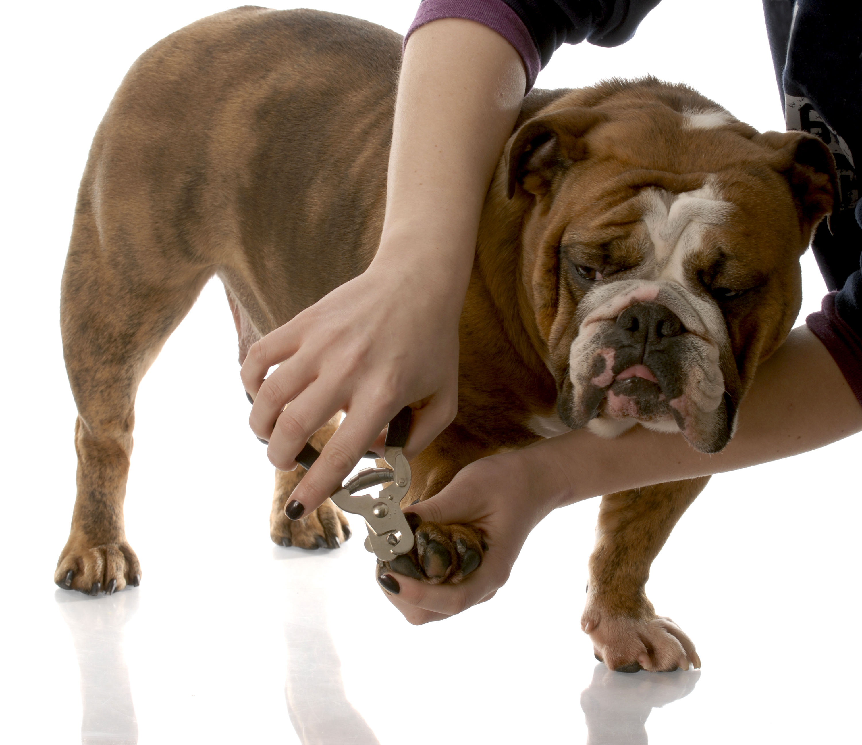 How To Safely Trim Your Pets Nails At Home Paws 2